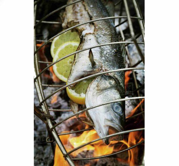 توری کبابی ماهی